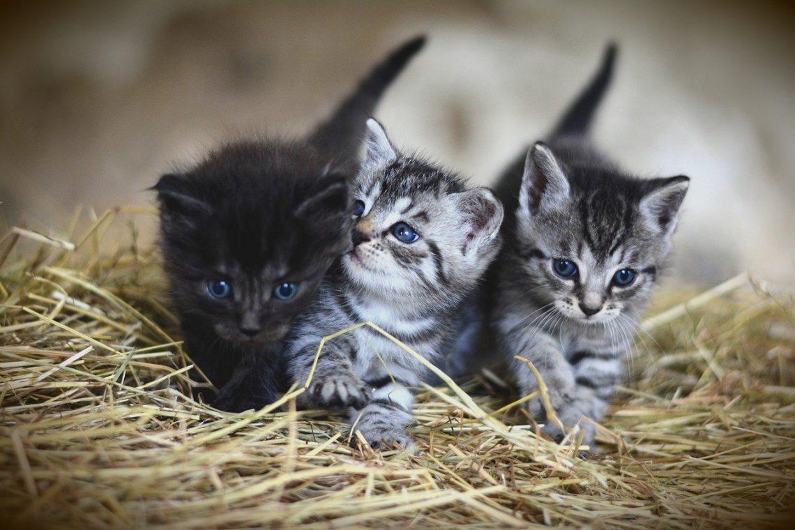 souscrire une assurance pour chat